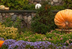 best things to do in fall in ogunquit